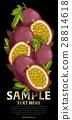 水果 混合 树叶 28814618