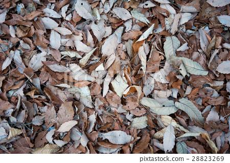 Fallen leaves 28823269