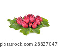 Hibiscus sabdariffa or roselle fruits 28827047