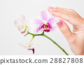 blossom, flower, finger 28827808