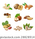 Set icons of nuts 28828914
