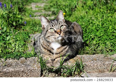 Cat that makes a hinoko 28829833
