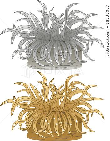 Sea anemones 28835067