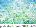 Blossoming  apple  tree  bokeh   background. 28840420