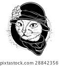 cat color woman 28842356