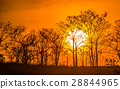 background, field, sunset 28844965