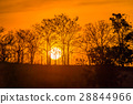 background, field, sunset 28844966
