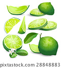 Lime collection 28848883