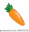 Carrot isolated illustration 28855926