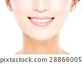 牙齿 女人 女性 28866005