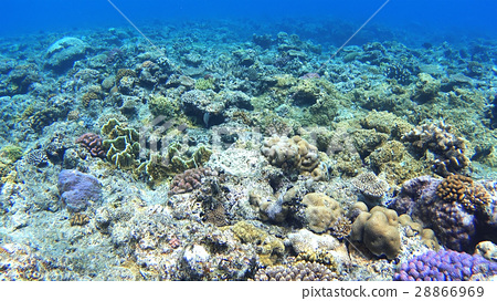 ธรรมชาติ,ปลาเขตร้อน,ปลา 28866969