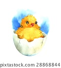 Chicken in the eggshell. Watercolor 28868844