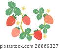 strawberries, strawberry, fruit 28869327