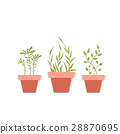 Vector potted plants 28870695