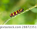red and yellow caterpillar 28872351