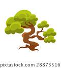 green, pine, bonsai 28873516