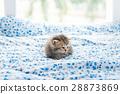 可爱 小猫 孤独 28873869