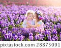 Kids in blooming garden with hyacinth flowers 28875091