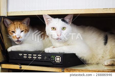 兩隻貓 28886946