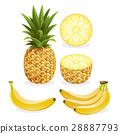 Pineapple and banana fruit. Vector illustration. 28887793