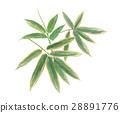조릿대, 얼룩조릿대, 잎 28891776