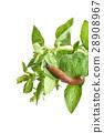 A slug on the garden herbs leaves 28908967