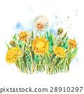 flower, dandelion, background 28910297