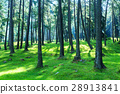 forest 28913841