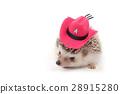 Hedgehog with cowboy hat. 28915280