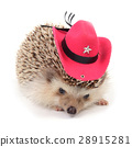 Hedgehot with red cowboy hat. 28915281