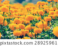 close up marigold flower on field 28925961