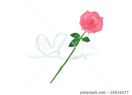 玫瑰花 玫瑰 薔薇 28926077