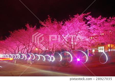 Wuling Farm Night Sakura 28927035
