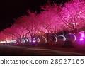 Wuling Farm Night Sakura 28927166