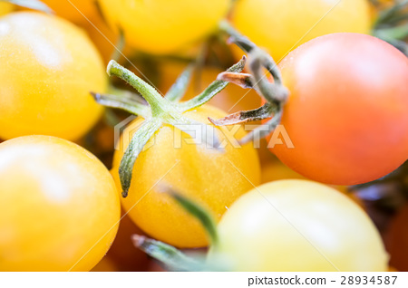 Little tomatoes  yellow and red color close up and 28934587
