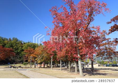교토 가을 宝が池 공원 어린이의 낙원 28937637