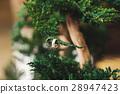 บอนไซ,งานแต่งงาน,งานสมรส 28947423