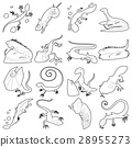 蜥蜴 类型 种类 28955273