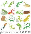 蜥蜴 类型 种类 28955275