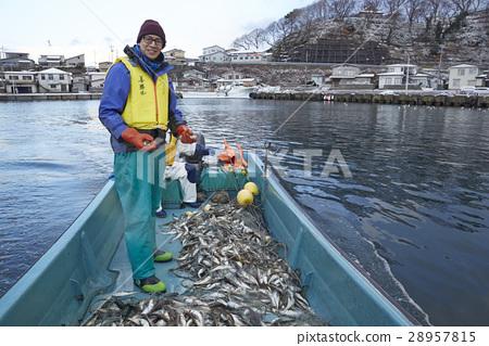 漁夫的肖像 28957815