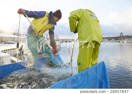 費希爾 漁夫 漁業 28957847