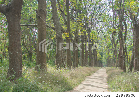 台灣台南虎山森林步道 28959506