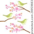 樱花和Ugusu 28959663