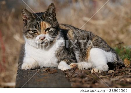 Stray cat 28963563
