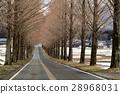 colonnade, treelined, tree-lined road 28968031