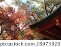 maple, yellow leafe, autumn 28973920