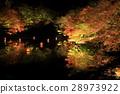 maple, yellow leafe, autumn 28973922