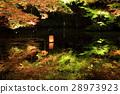 maple, yellow leafe, autumn 28973923