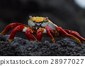What a crab! 28977027