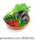水彩 水彩畫 京都蔬菜 28984281